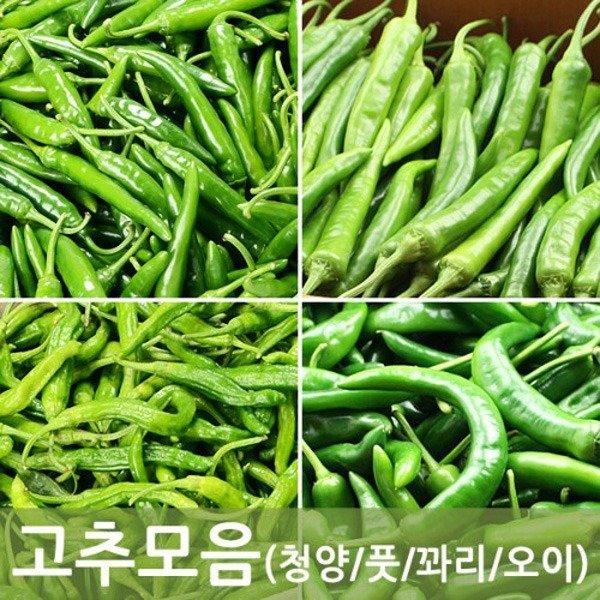 소포장 고추모음(청양/오이맛/꽈리/풋고추)