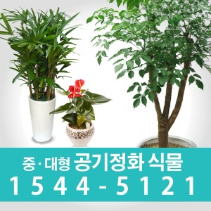 관엽화분/동양난/서양난/ 꽃배달서비스 꽃집