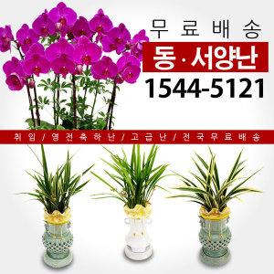 고급동양난/서양난/관엽 개업/승진 꽃배달/꽃집/화원