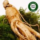 충남논산 남형구생산자6-5년 난발인삼(세척무료선택)