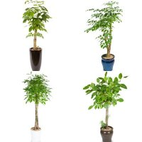 관엽 화분/공기정화식물/개업축하화분/전국꽃배달