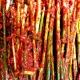 전라도 시골종가에서 담그는 전통김치와 반찬.장아찌.