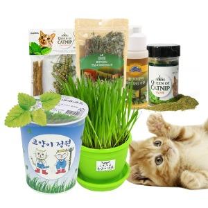 캣닢 캣그라스 컵 화분 마따따비 캣닢가루 고양이용품