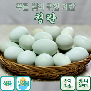 금강초계 청란 식용 부화용/푸른색달걀/청계알/청계란
