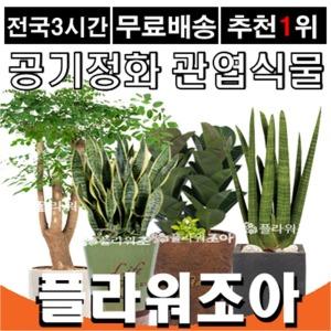공기정화식물/꽃배달/축하화분 개업선물 승진 취임