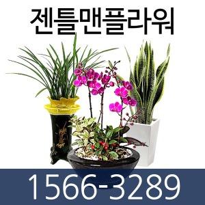 개업화분 공기정화식물 관엽식물 동양란 서양란