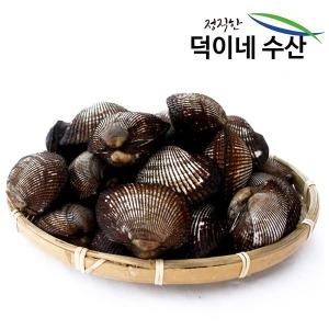 100% 국내산 남해안 싱싱 피조개 2K 특가판매