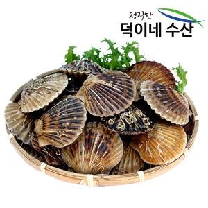 100% 국내산 남해안 싱싱 가리비 2K 특가판매