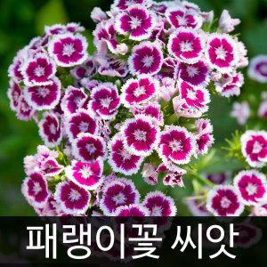 패랭이꽃씨앗 패랭이꽃 씨앗 ( dianthus seed 400알 )