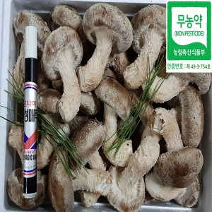 친환경 B+ 착한송이버섯 1kg송향버섯