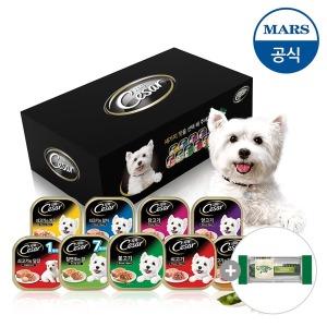 옥션단독패키지 시저 강아지캔 18개+강아지껌(증)