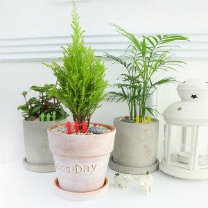 공간별 실내공기정화 관엽식물화분 미세먼지제거
