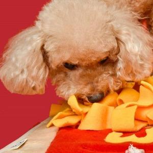 멍도날드 후각놀이매트 강아지 훈련용품