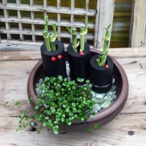 천연수반가습기모음 옹기 공기정화식물 개운죽 가습기
