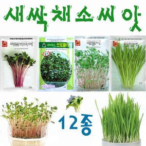 새싹씨앗18종/베이비씨앗/밀싹/보리싹/홍화싹/클로버