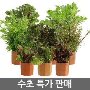 수초모음/키우기 쉬운 수초/수초용품