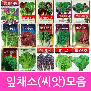 씨앗 모음전 채소씨앗/꽃씨(8천무배)상추 토마토 씨