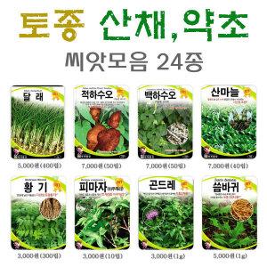 토종산채 약초씨앗24종/산나물씨앗/달래/적하수오/백