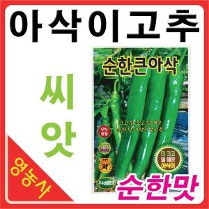 순한큰 아삭고추씨앗 100립 아삭이 풋고추 고추씨앗