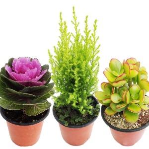 10월7일신상/공기정화식물/화분/미니화분/식물/허브