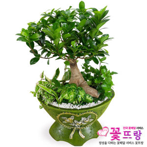 인삼펜다 개업선물/공기정화식물/전국꽃배달서비스