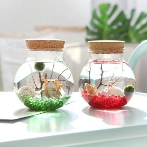 피규어증정 전용 유리병  유리자갈 마리모 수경식물