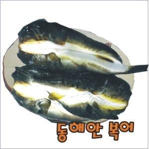 동해안 복어/손질복어-가식부위1kg (1~2미)/산지직송