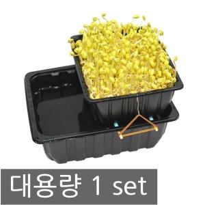 대용량 콩나물키우기 1세트 실험관찰 기르기 재배기