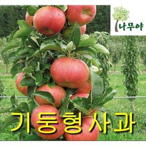 기둥형사과접목1년/철쭉/나무/묘목/자두/구기자/사과