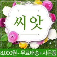 채소씨앗 200여종/야채 나물 꽃 허브 잔디 종자