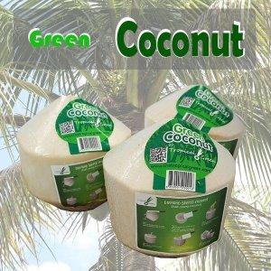 (st푸른농원) 그린 코코넛 6kg내외(6입)