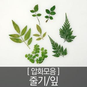 {압화-줄기/잎}압화 압화공예 압화편지 압화네일 캔들