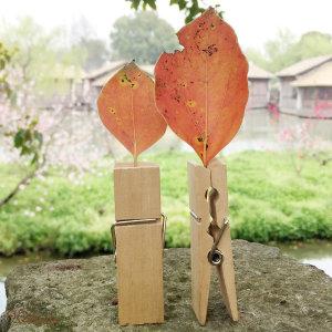 미니 우드 나무집게 의류매장용품 사진 포토 인테리어