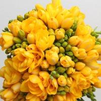 후리지아 생화 프리지아 꽃배달 꽃다발 포장가능