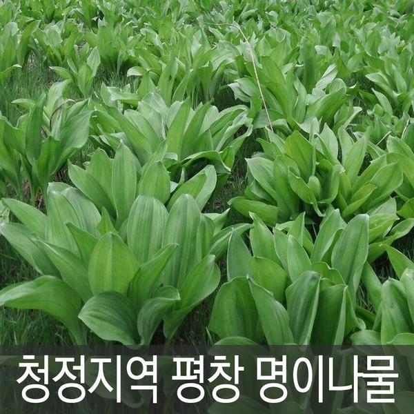 강원도 평창 청정지역 채미농원 명이나물 1kg 예약접수