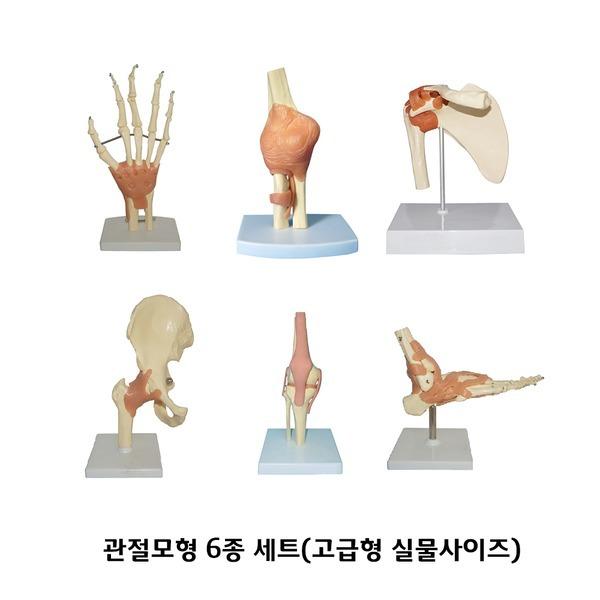 관절모형 6종세트