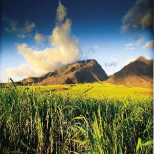 하와이 완전정복  이웃섬이 공짜  하와이 오아후섬+ 이웃섬(마우이 or 빅아일랜드 or