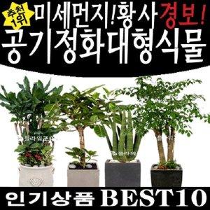 미세먼지식물/공기정화식물/대형화분 고급화분 개업