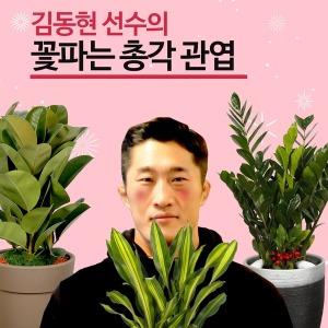공기정화식물 기획전 관엽식물 고급화분 50%할인