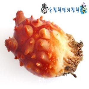 통영 활멍게2kg/깐멍게500g/해삼/초장