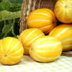 다담농산 2020첫수확 성주참외5kg 산지직송