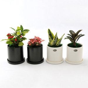 가꾸지오 공기정화식물 무광택원형화분4p세트