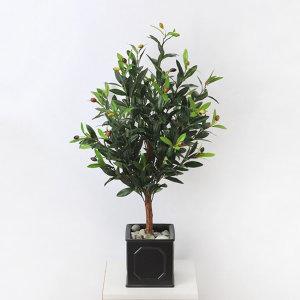 가꾸지오 올리브나무(diy상품)