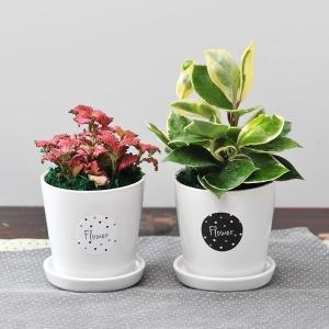 가꾸지오 공기정화식물 원형화이트 1+1 SALE
