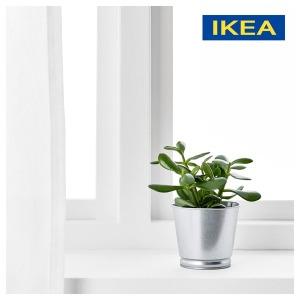 분갈이 화분 다육이 인테리어 식물 꽃 미니 BINTJE - 상품 이미지