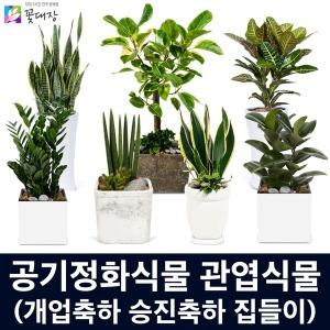 개업화분 공기정화식물 관엽식물 소형/중형 꽃배달