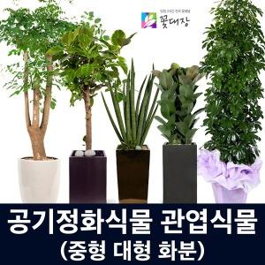 당일꽃배달/개업화분/관엽식물/승진 취임 축하