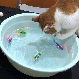 로봇물고기 LED 움직이는 고양이장난감 4개 세트