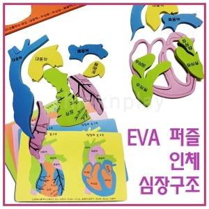 EVA 인체 심장구조 퍼즐/심장모형/초등 과학 방과후