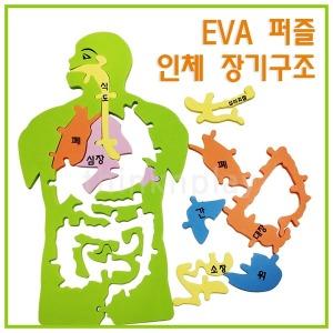 EVA 인체 장기구조 퍼즐 /장기모형/초등 과학 방과후